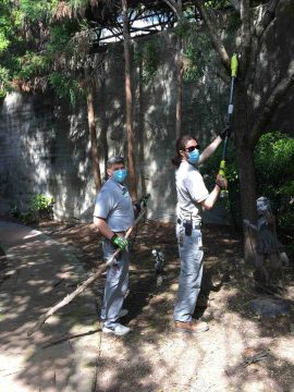 Two team members prune trees during a pandemic.